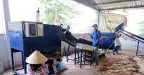 Vĩnh Long: Nâng cao chất lượng nấm dược liệu