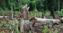 Phó Thủ tướng yêu cầu khẩn trương điều tra vụ giết bảo vệ rừng tại Đắk Nông