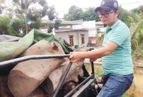 Gia Lai: Tạm giữ xe container chở 31 tấn gỗ hương
