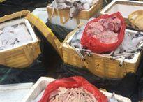 Gần 700 kg thịt chó mèo bốc mùi chuẩn bị vào nhà hàng
