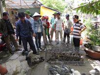 Thả 150 con chim và 7kg rùa, ba ba các loại về Vườn Quốc gia Tràm Chim
