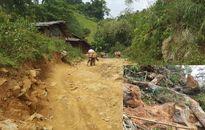 Yên Bái: Rừng pơ mu tiếp tục bị 'xẻ thịt'