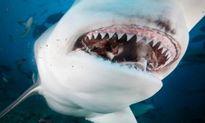 Phương pháp giúp răng người tái sinh như cá mập