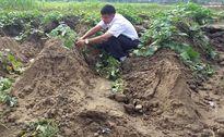 Lào Cai: Mưa lớn gây thiệt hại gần 1 tỷ đồng