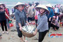 Hứa hẹn vụ cá bắc bội thu của ngư dân Hà Tĩnh