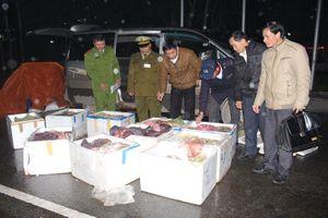 Hà Tĩnh: Bắt xe ô tô vận chuyển 600 kg phụ tạng bốc mùi