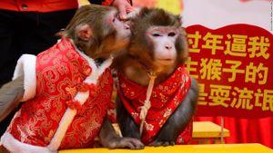 Hình ảnh người dân châu Á chào đón năm mới 'năm con khỉ'