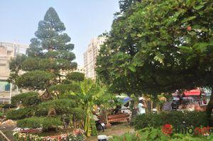 Ngắm những cây kiểng độc, lạ hút khách tại hội hoa Tết Sài Gòn