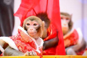 Nhà phong thủy nói về vận mệnh năm khỉ