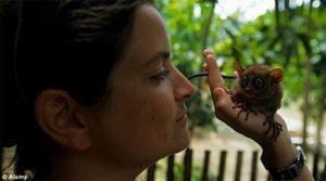 Ngộ nghĩnh loài khỉ mắt lồi chỉ cao hơn 10 cm