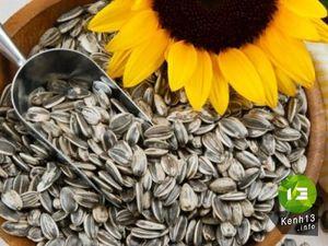 Nguy hiểm khôn lường khi ăn quá nhiều hạt hướng dương