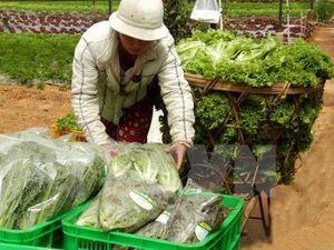 Thực phẩm, rau xanh, tăng giá 'chóng mặt'