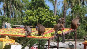Xem khỉ đua chó ở đảo Khỉ