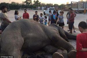 Thế giới phẫn nộ trước vụ việc voi già ngã quỵ và chết khi thấy pháo hoa mừng Năm mới