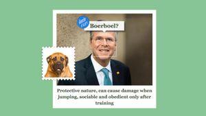 Microsoft phát hành công cụ dự đoán giống chó bằng hình ảnh, dùng được vui vẻ cho người