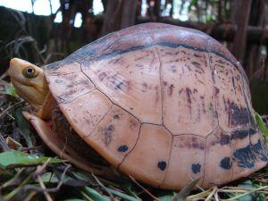 """Kỳ thú """"gia đình rùa"""" ở Vườn Quốc gia đầu tiên Việt Nam"""