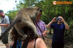 Độc đáo những danh thắng đầy khỉ ở Việt Nam