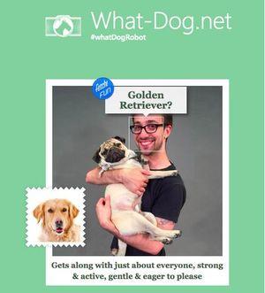 """Microsoft tung ứng dụng """"Bạn là giống chó nào"""""""