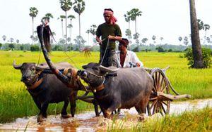 Campuchia nhập khẩu khoảng 100.000 tấn rau xanh mỗi năm