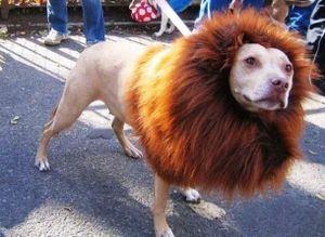 Những hình ảnh siêu hài hước của loài chó