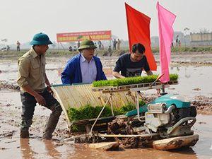 Tân Bí thư Hà Nội lội bùn cấy lúa xuân cùng nông dân