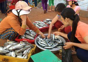Đắt hàng như hải sản đưa lên bờ còn 'giãy đành đạch' ở Lý Sơn