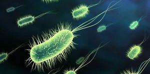 10 vi khuẩn cần phải đề phòng khi thời đại 'kháng kháng sinh' đã đến