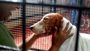 Nỗi buồn của 156 chú chó thí nghiệm lần đầu tiên được nhìn thấy ánh sáng mặt trời