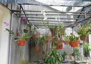 Mê mệt trước khu vườn trăm loài hoa lan của ông bố trẻ Thái Nguyên