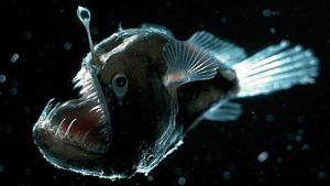 Cận cảnh những sinh vật kỳ quái dưới đáy biển sâu