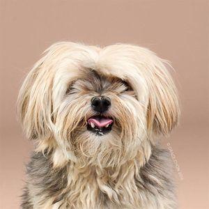 Chó 'biến hình' sang chảnh khi thay đổi kiểu đầu