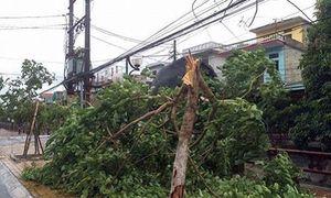 Bão số 1 đổ bộ Thái Bình - Ninh Bình, gió giật cấp 12