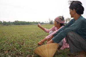 Lo nông dược gây ô nhiễm ruộng đồng