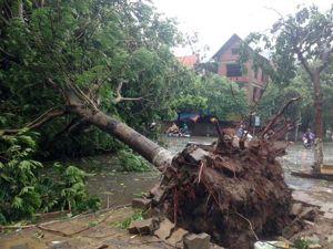 Bão số 1 gây thiệt hại nhiều tỉnh ở khu vực Bắc bộ