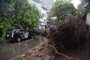 Bão càn quét Hà Nội: Gió giật mạnh, cây cối, xe máy đổ hàng loạt