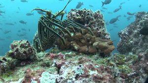 Tò mò 10 điểm tham quan kỳ vĩ dưới lòng đại dương