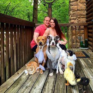 Thú vị cặp vợ chồng sống chung với chó, mèo, vịt như một gia đình