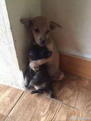 Hai chú chó ôm nhau mọi lúc mọi nơi gây bão dân mạng