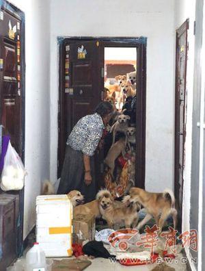 Ảnh: Cụ bà 78 tuổi nuôi hàng chục con chó để vơi nỗi buồn