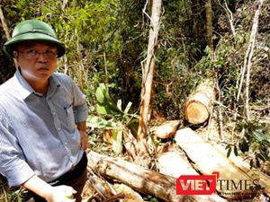 Họp báo Vụ phá rừng pơ mu ở Quảng Nam: Chỉ cần có chứng cứ là bắt liền!