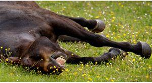 Nếu để người khác nhìn bạn giống với chú ngựa này, thì chắc chắn sẽ có ngày bạn bị đá ra đường