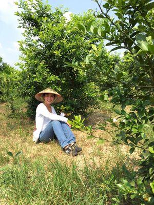 Khu vườn rộng bát ngát và sai trĩu quả của diễn viên Chiều Xuân