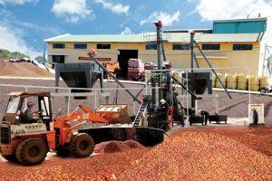 Xuất khẩu gạo giảm, cà phê tăng