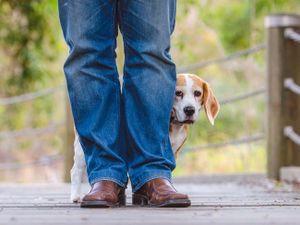 Giải mã 5 hành vi kì lạ mà cún cưng của bạn hay làm