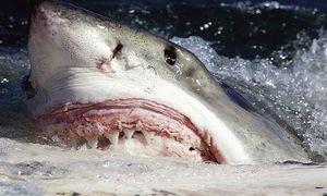 10 sinh vật sở hữu bộ hàm đáng sợ nhất hành tinh