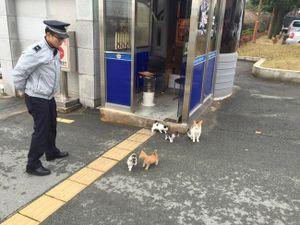 Câu chuyện lay động trái tim phía sau biệt đội 'mèo cảnh sát' tại Busan, Hàn Quốc