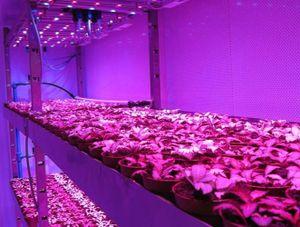 Thăm nông trại rau sạch dùng đèn mờ như hộp đêm