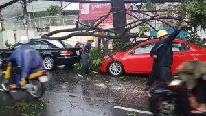 Mưa lớn, cây xanh liên tục gãy đổ đè nhiều xe hơi ở TPHCM