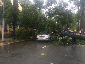 Sài Gòn lại mưa to, cây xanh bật gốc đè bẹp ô tô khu trung tâm