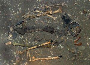 Em bé đầu tiên mang gene của 3 'bố mẹ'; phát hiện di chỉ khảo cổ 2 triệu năm
